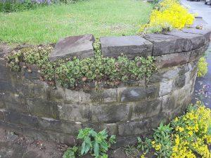 Pfingsten - Pflanzen heben Stein